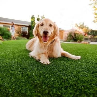 Pet Friendly Artificial Turf Inland Empire