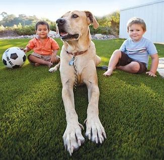 Pet Turf, Artificial Turf, Pet Friendly Synthetic Grass